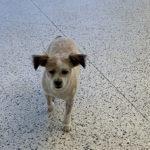 Is Concrete a Pet Friendly Option?