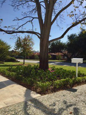 Perth_Landscaping_Delphie_Court_Rossmoyne